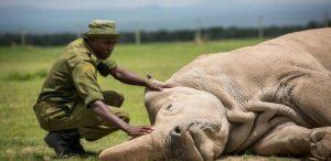 وحيد القرن الابيض /المنتصف