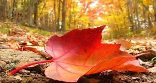 فصل الخريف /المنتصف